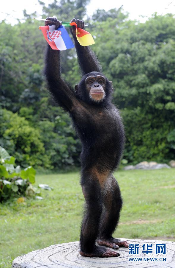 熊猫隆隆,大猩猩明明,河马小欢,小老虎波比,大羚羊贝贝等动物明星悉