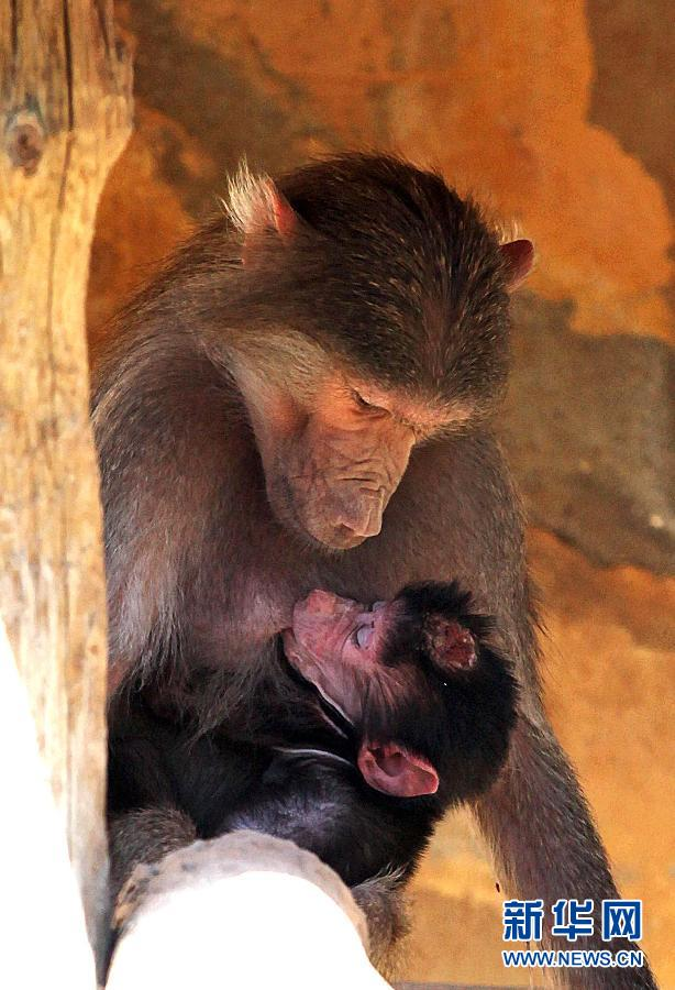 """安塔利亚动物园迎来""""婴儿潮"""""""