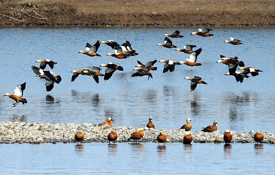 湿地常见的动物