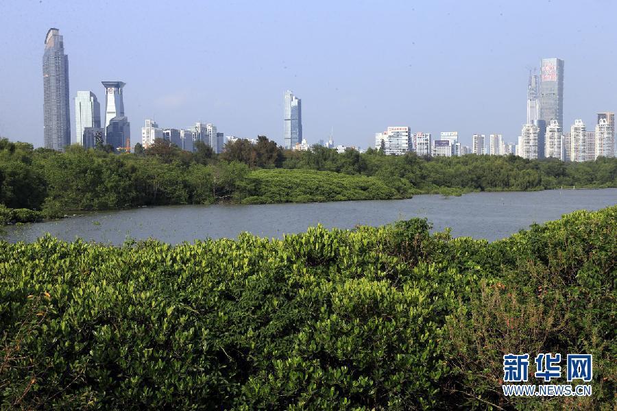 从深圳湾北东岸深圳河口的红树林自然保护区远眺深圳市区拔地而起