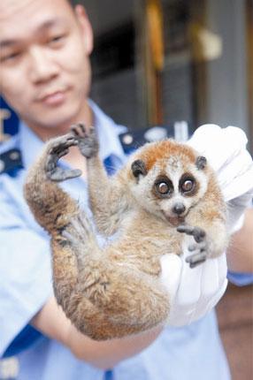深圳野生动物保护