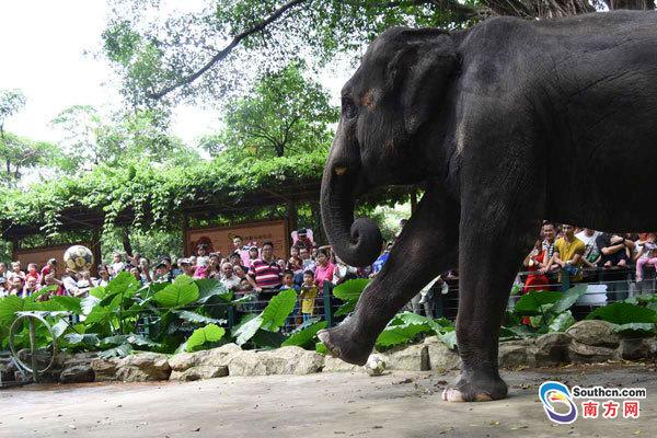 深圳野生动物园国庆假期共接待游客13万人