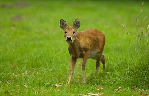 奇葩动物照片走红:羚羊长脖子大耳朵!