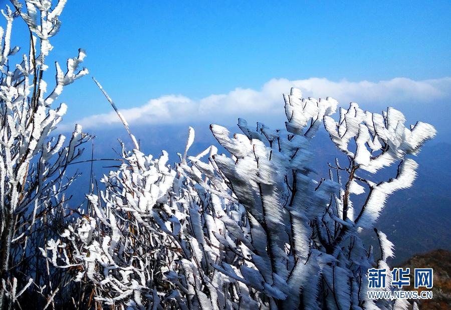 太阳,蓝天,冰雪构成了冬天的童话世界.树木披上雪花变得玉树临风.