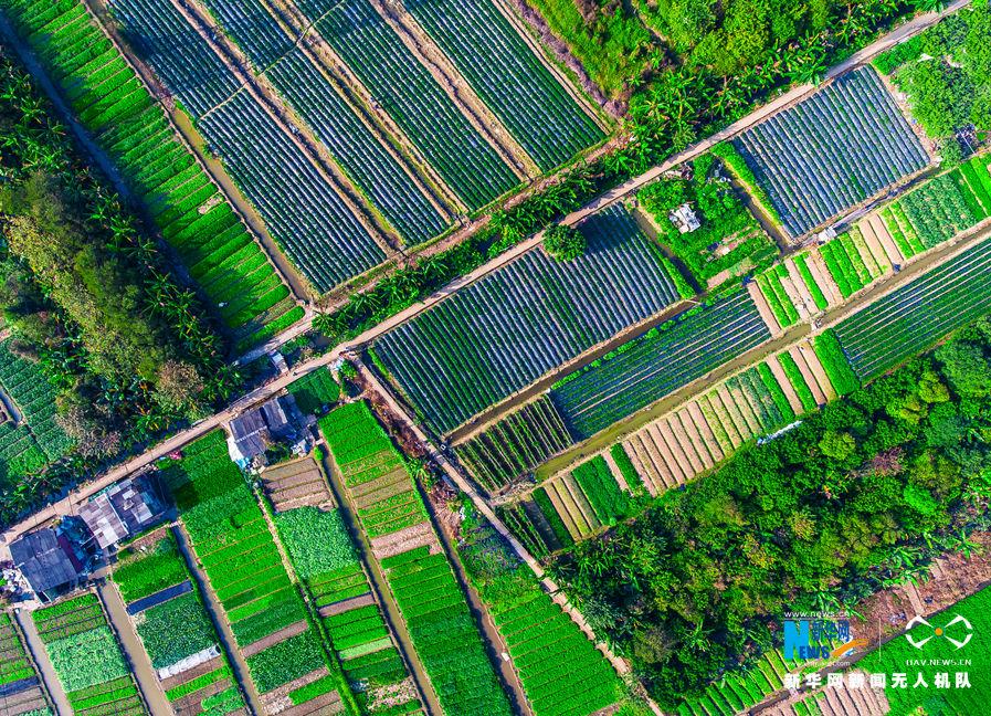 农田平面图手绘