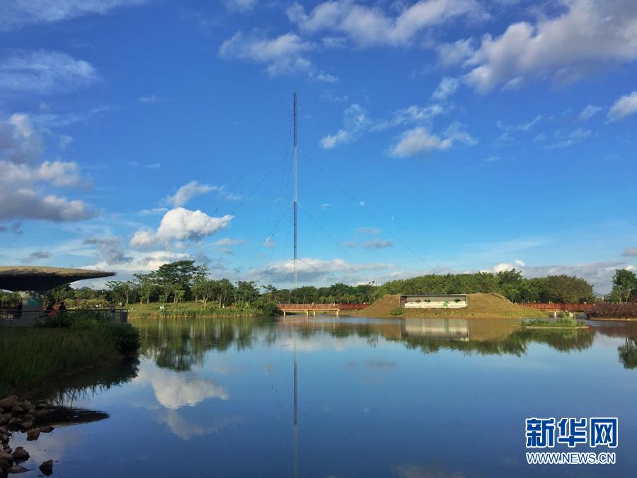 6月12日上午,深圳福田区红树林生态公园烈日当空,天空湛蓝.