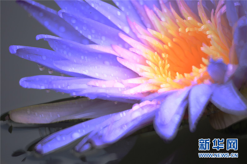 折纸花步骤图解莲花