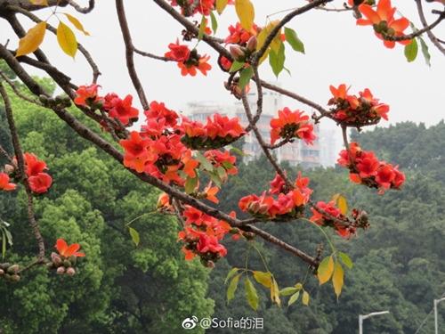 广东:21日夜间起冷空气携雨来袭