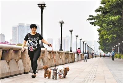 文明养犬|广州已登记养犬10.6万只 呼吁公开养犬管理费用途