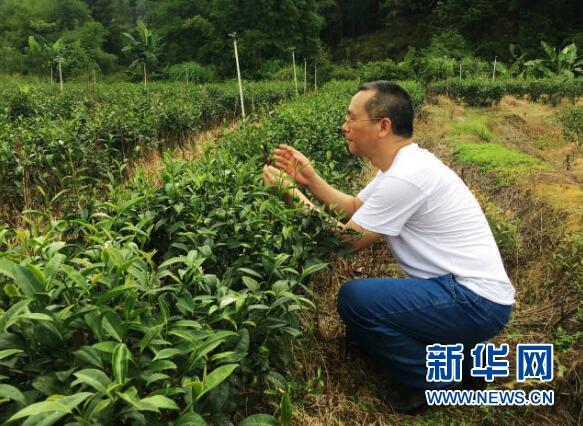陈洪发:打造广东金砂茶知名品牌