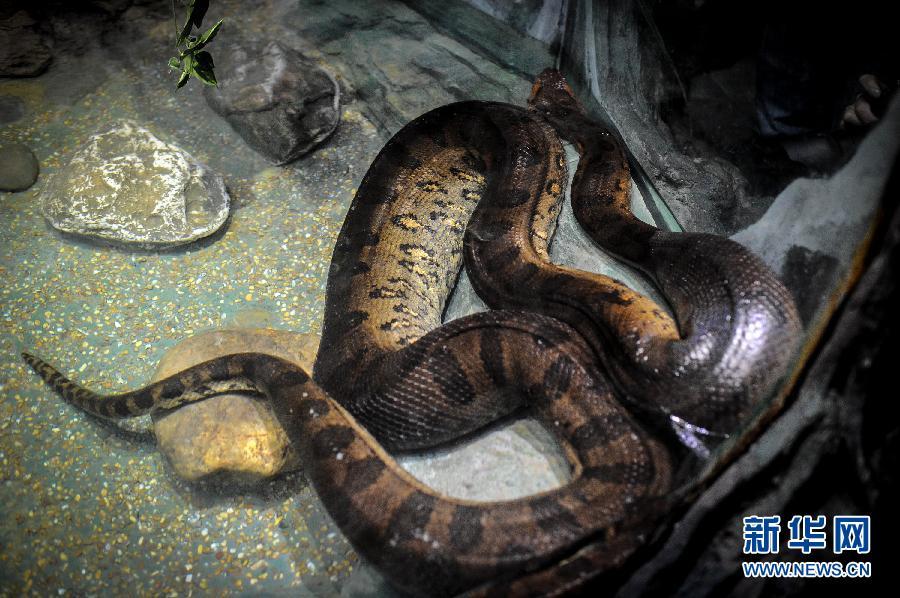 在广州长隆野生动物世界主题生态蛇园