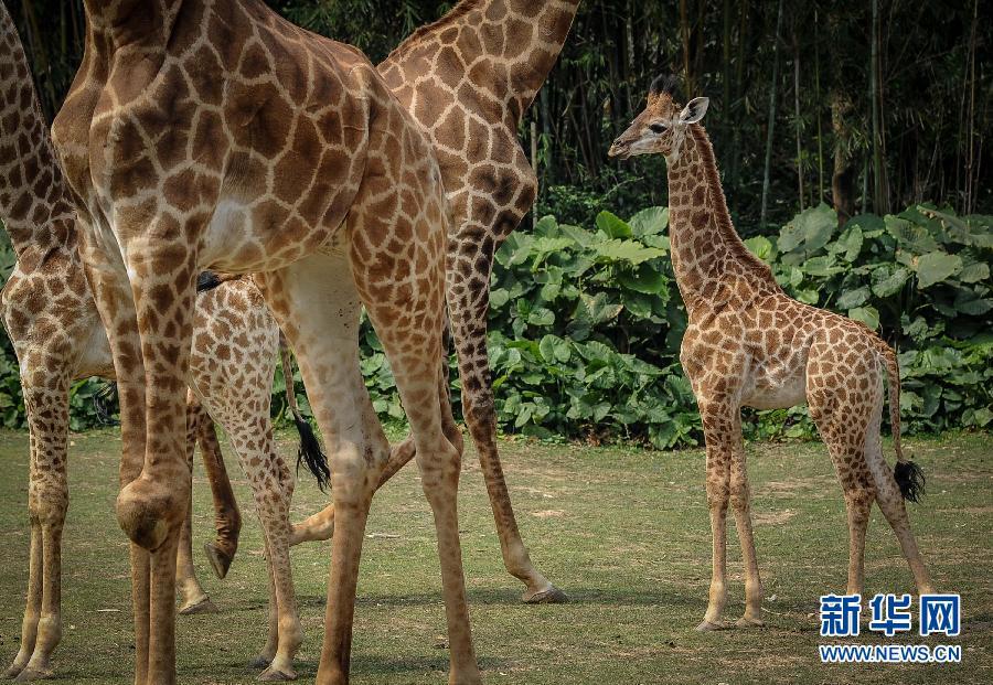 """广州长隆野生动物世界迎来动物生育繁殖高峰,园区增添了数十种上百位"""""""