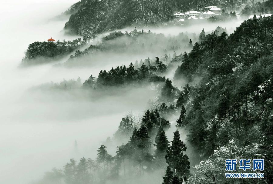 加强森林生态系统图片