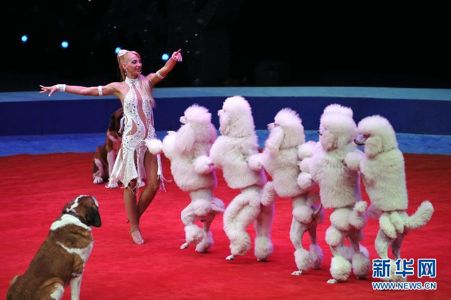 首届中国国际马戏节在珠海开幕