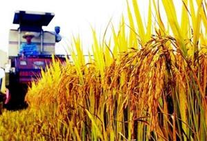 國家糧食科技活動周在深舉辦 全國96家糧油企業參展