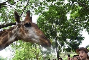 與動物來個親密互動 深圳野生動物園刷新單日遊客紀錄