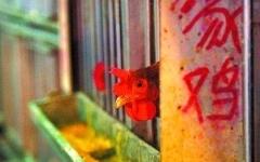 廣州8月起擴大活禽交易限制區 涉及海珠天河等四區