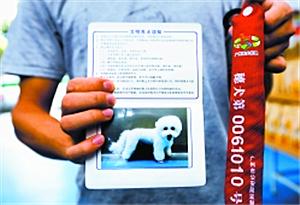 整治初見成效 廣州養犬登記一月增八千只