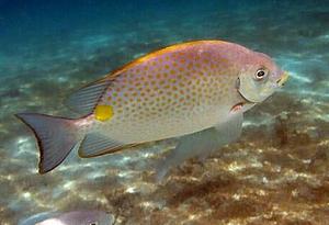 慎食深海魚,遠離雪卡毒素