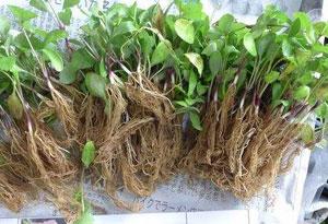質檢部門嚴查植物種子種苗非法進境