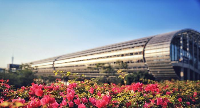 冬至陽光明媚,帶你花城看花