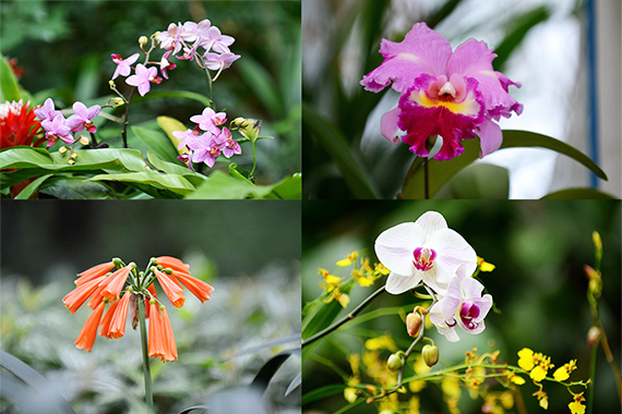 古韻香蘭迎新歲 春遊蘭圃正當時