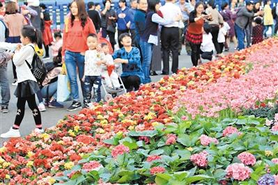 1561.10萬人過年花城看花