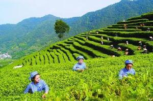 葉貞琴:大力發展特色農業 加快實現富民興村