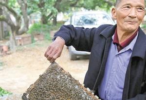 东莞荔枝花长势喜人 预计今年蜂蜜产量比往年多三成