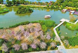 粵港澳大灣區將建森林城市群