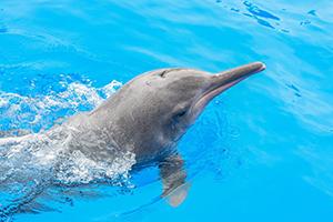 """全国首届""""中华白海豚保护宣传日""""活动在珠海启动"""