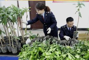 非法攜帶、寄遞植物種苗入境 後果很嚴重
