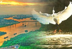 世界環境日|鳥語花香家園美 綠化廣東在行動