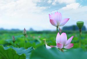 麥飄香、時雨至、農事忙……咏廿四氣詩·芒種