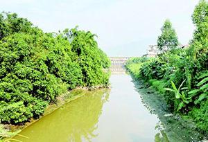广东计划三年基本消除地级以上城市城区黑臭水体