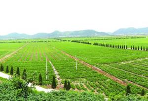 广东:上半年第一产业增速创6年来新高