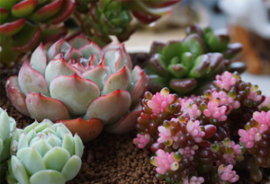 注意了!秋季养花有讲究