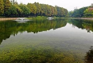 广深9成水体今年消除黑臭 全省增5000公里污水管网