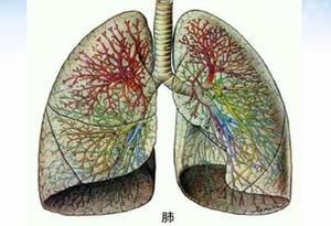 漲知識|人體是如何與外界進行氣體交換的?