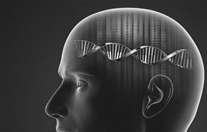 大腦發育過程中存在大量DNA變異