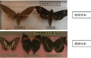 蝴蝶和蛾你了解多少?