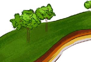 科普|土壤分為哪幾層?