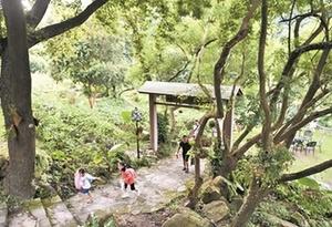 廣州要創建17個森林小鎮