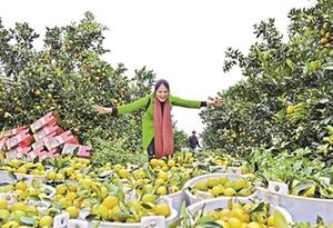 2018廉江紅橙節昨開幕 首日簽約52.2億元