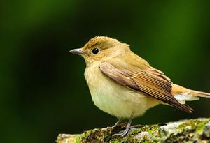 廣東:明年起5年全面禁獵野生鳥類