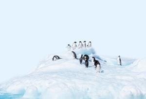 """探尋南極冰蓋融化""""源代碼"""""""