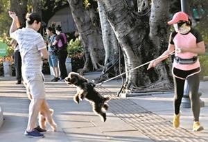 遛狗不牽繩 警告為主處罰為輔