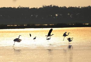 南沙濕地入選廣東省首批十佳觀鳥勝地