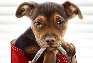 動物冒險片《一條狗的回家路》中國將映