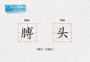 """廣東話百科:膊頭(""""膊頭""""在哪裏?)"""
